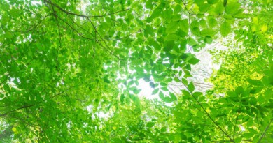 【佐久学舎報告】聖書研究の1番の目的は祈りだ 湯田 大貴(ひろき)